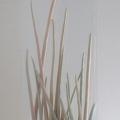 Gras - Ausschnitt
